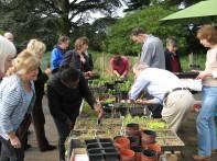 Seedling Exchange, April 2011