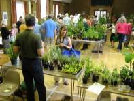Plant sale 2011