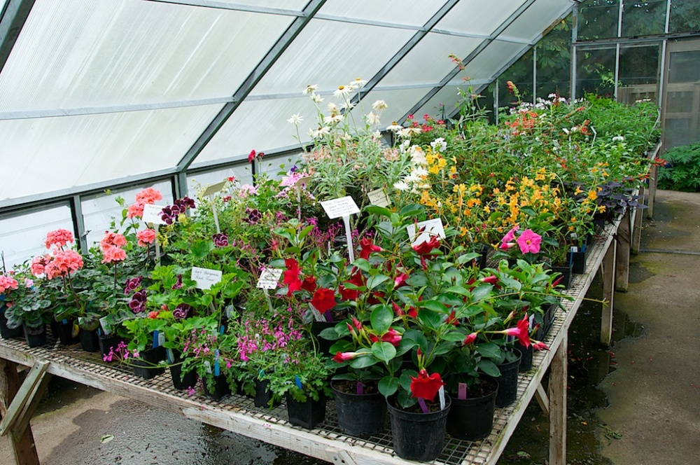 Visiting Derry Watkins at Special Plants (3/6)