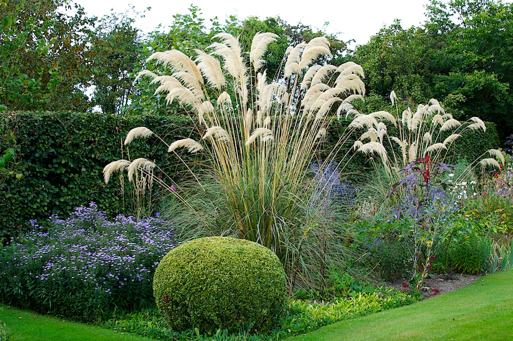 Members open garden visit report bromley hall hardy for Landscaping ideas with pampas grass