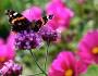 Members Open Garden : Visit Report, BromleyHall