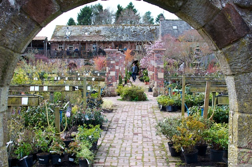 The nursery with the restaurant in the distance