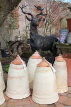Stag with rhubarb forcing jars