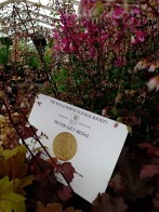 Silver-Gilt for Daisy Roots