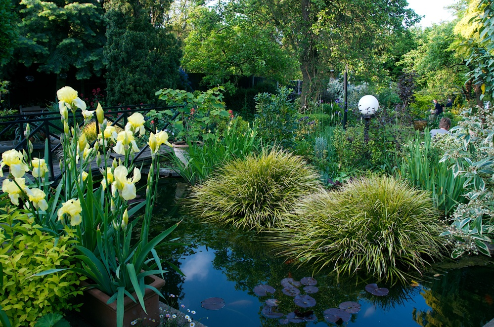 Open Garden in Letchworth, Renata Hume, HHPS and NGS (1/6)