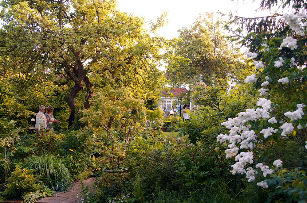 Open Garden in Letchworth, Renata Hume, HHPS and NGS (6/6)