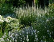 The White Garden 2