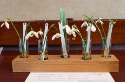 Galanthus varieties exhibit