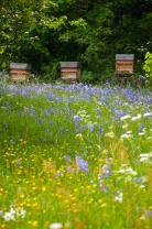 Wild meadow and beehives