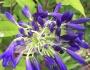 Member's Open Garden | TessaDavies
