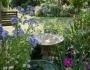 Member's Open Garden Reminder – Liz Machin'sGarden